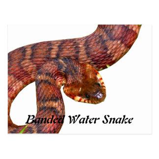 Serpiente de agua congregada postales