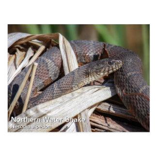 Serpiente de agua septentrional postales