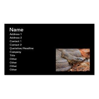 Serpiente de agua plantillas de tarjeta de negocio