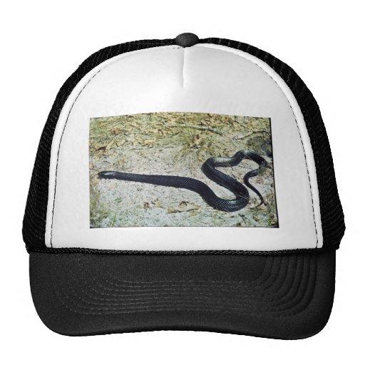 Serpiente de añil gorros