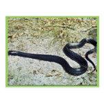 Serpiente de añil postales