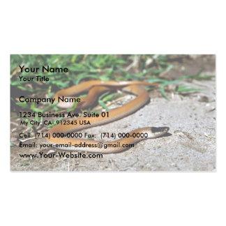 Serpiente de cabeza negra de los llanos plantilla de tarjeta personal