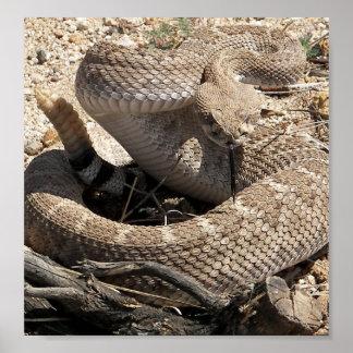 Serpiente de cascabel de Arizona Diamondback Poster