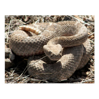Serpiente de cascabel de Arizona Diamondback Postal