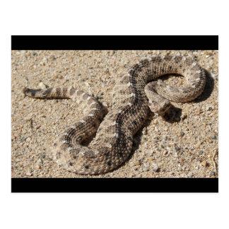Serpiente de cascabel de cuernos del Sidewinder de Postales