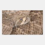 Serpiente de cascabel de Diamondback occidental Rectangular Pegatina