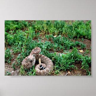Serpiente de cascabel de Diamondback occidental Póster