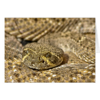 Serpiente de cascabel de Diamondback occidental Tarjeta De Felicitación