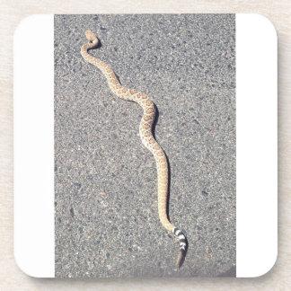 Serpiente de cascabel de los prácticos de costa posavaso