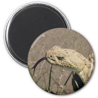 Serpiente de cascabel de pradera R0008 Imán Redondo 5 Cm