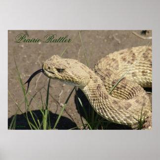 Serpiente de cascabel de pradera R0008 Posters