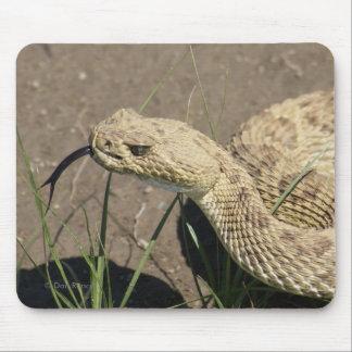 Serpiente de cascabel de pradera R0008 Tapete De Ratones