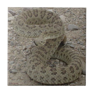 Serpiente de cascabel de pradera R0009 Teja