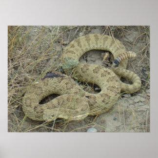 Serpiente de cascabel de pradera R0020 Posters
