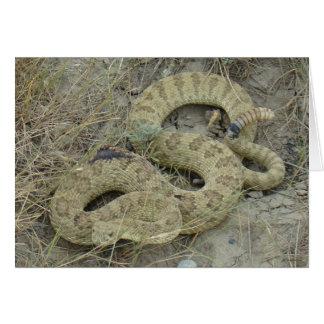 Serpiente de cascabel de pradera R0020 Tarjeta