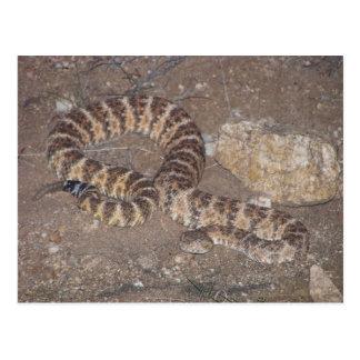 Serpiente de cascabel de tigre tarjeta postal