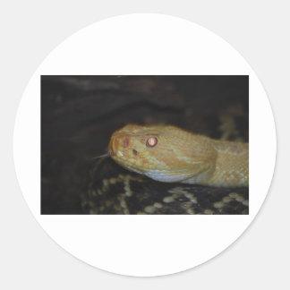 Serpiente de cascabel del albino pegatina redonda