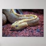 Serpiente de cascabel del albino poster