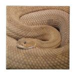 Serpiente de cascabel del basilisco azulejo