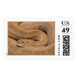 Serpiente de cascabel del basilisco envio