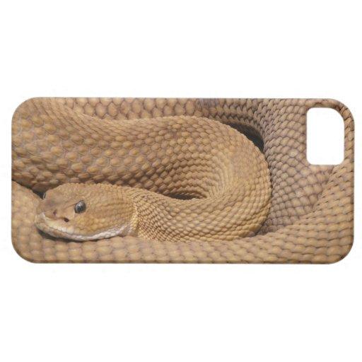 Serpiente de cascabel del basilisco iPhone 5 Case-Mate coberturas