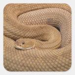 Serpiente de cascabel del basilisco calcomania cuadradas personalizadas
