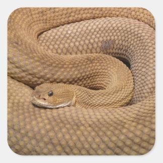 Serpiente de cascabel del basilisco pegatina cuadrada