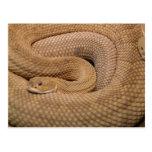 Serpiente de cascabel del basilisco postal