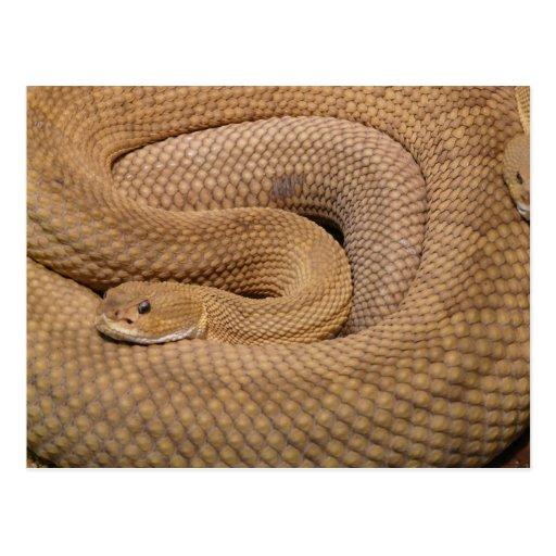 Serpiente de cascabel del basilisco postales