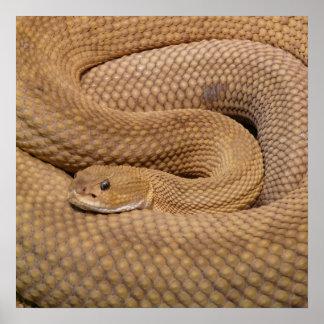Serpiente de cascabel del basilisco póster