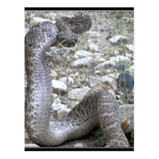 Serpiente de cascabel del lavado de Martínez en el Postal