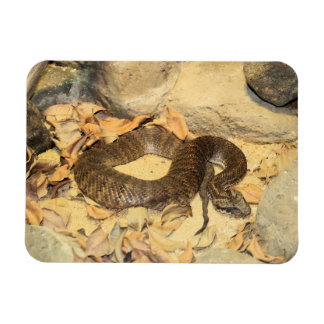 Serpiente de cascabel rectangle magnet