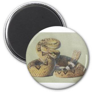 Serpiente de cascabel imán de frigorifico