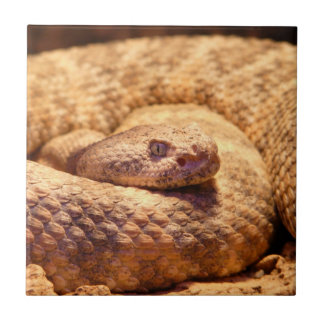 Serpiente de cascabel manchada asustadiza azulejos cerámicos