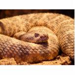 Serpiente de cascabel manchada asustadiza esculturas fotograficas