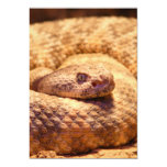 Serpiente de cascabel manchada asustadiza invitación 12,7 x 17,8 cm