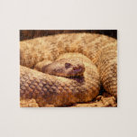 Serpiente de cascabel manchada asustadiza puzzle con fotos