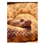 Serpiente de cascabel manchada asustadiza tarjeta postal