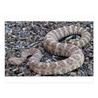 Serpiente de cascabel manchada tarjeta postal