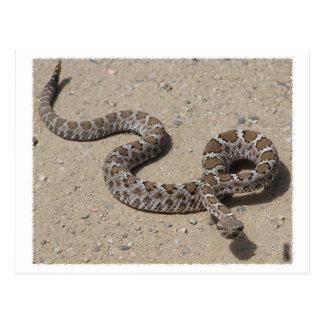 Serpiente de cascabel negra de AZ (no haga clic si Postal