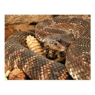 Serpiente de cascabel postal