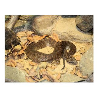 Serpiente de cascabel postales