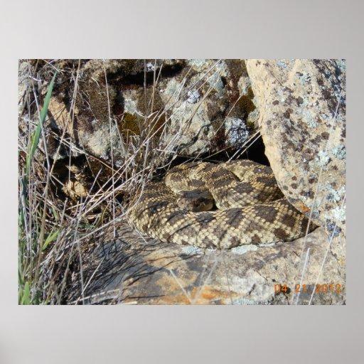 Serpiente de cascabel póster
