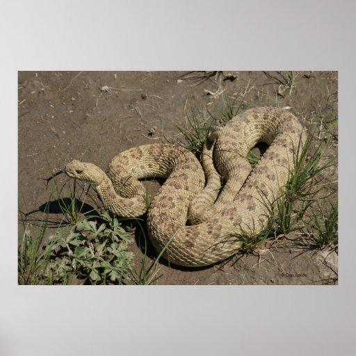 Serpiente de cascabel R0006 Póster