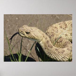 Serpiente de cascabel R0008 Impresiones