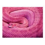 Serpiente de cascabel rosada del basilisco postal