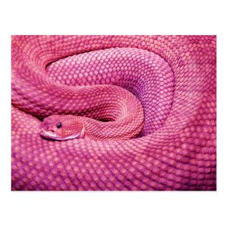 Serpiente de cascabel rosada del basilisco tarjetas postales