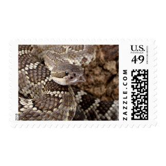 serpiente de cascabel franqueo
