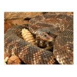 Serpiente de cascabel tarjeta postal