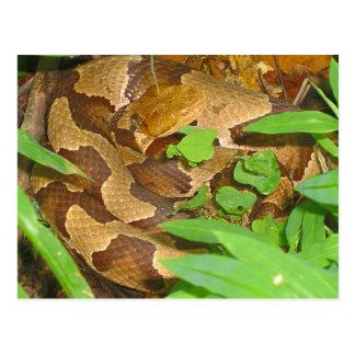 Serpiente de Copperhead Postales